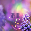 http://i4.glitter-graphics.org/pub/1262/1262674sgm74v6xpc.png