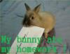 My bunny ate my homework